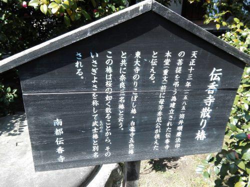 3月12日 伝香寺(奈良市)の散り椿(武士椿)