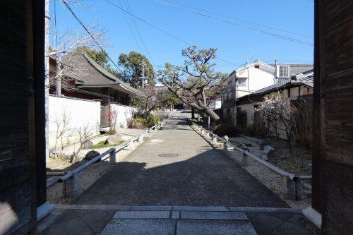 知恩寺のマメザクラ 長徳寺のオカメ桜