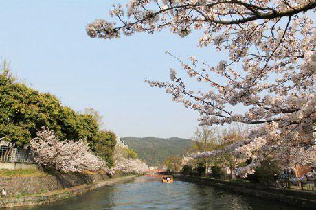 桜散歩 琵琶湖疏水(冷泉橋ー南禅寺船溜)