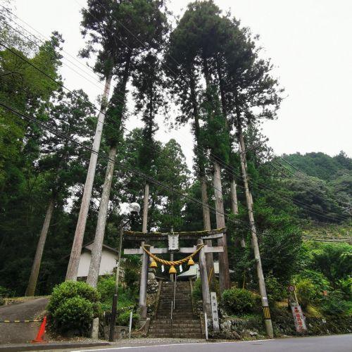 狛龍との再会【養澤神社】