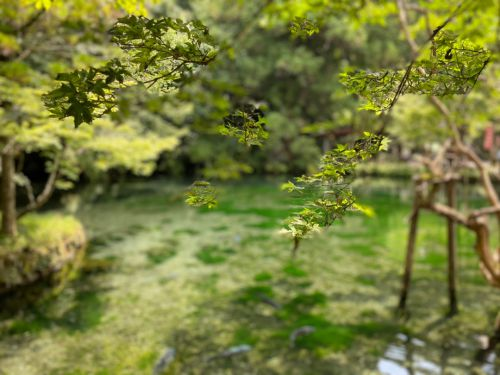 涌釜神社と出流原弁天池